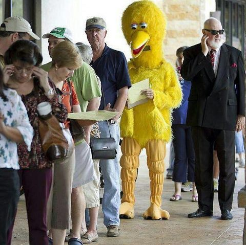 Chicken Voter