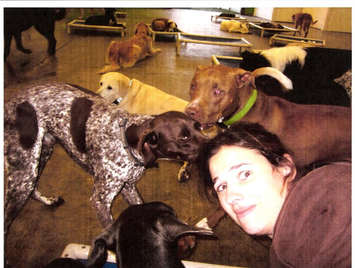 working doggie daycare