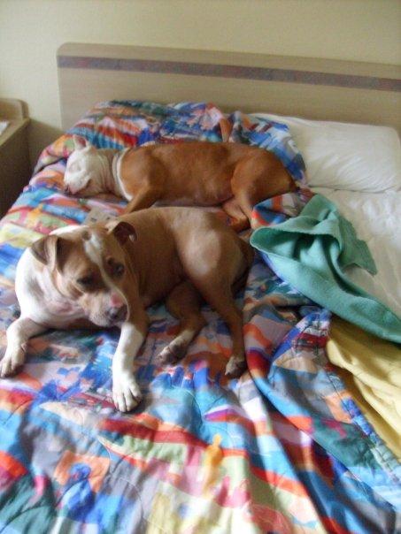 Maggie Sleepy on Hotel Bed
